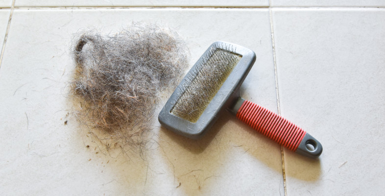 Pet Hair Everywhere? We Have 4 Care Tips